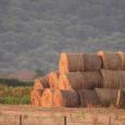 Mise en place récemment, la Commission départementale de consommation des espaces agricoles de Haute-Corse dévoie son objet qui vise à la préservation des terres agricoles. U Levante s'interroge sur le […]