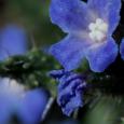 En Corse, 11 plantes environ sont en danger critique de disparition, 32 plantes sont en danger de disparition, 95 plantes sont vulnérables. La liste rouge mondiale de l'Union internationale pour […]
