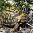 Au 8 mars 2018, le saccage concerne 15 hectares en zonage N (théoriquement à conserver à l'état naturel!) du PLU d'Aiacciu, dont 7 hectares de l'espace remarquable du Padduc (théoriquement […]