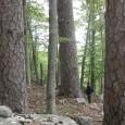 Forêts anciennes de Méditerranée: le WWF a classé des peuplements de Corse dans le Top 10 des hauts lieux de naturalité français. Photographie :Agent ONF DR Corse (in, M. Rossi, […]