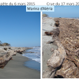 la tempête a fortement érodé la plage et mis à nu d'énormes troncs placés antérieurement en tant que protection. Des tonnes de bois flottés, chariées par le Tavignanu en crue, […]