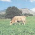 Le 24 mars 2015, la Conseillère exécutive Maria Guidicelli a présenté à U Levante les évolutions envisagées relatives aux espaces stratégiques agricoles (ESA) et aux espaces mutables pour des enjeux […]
