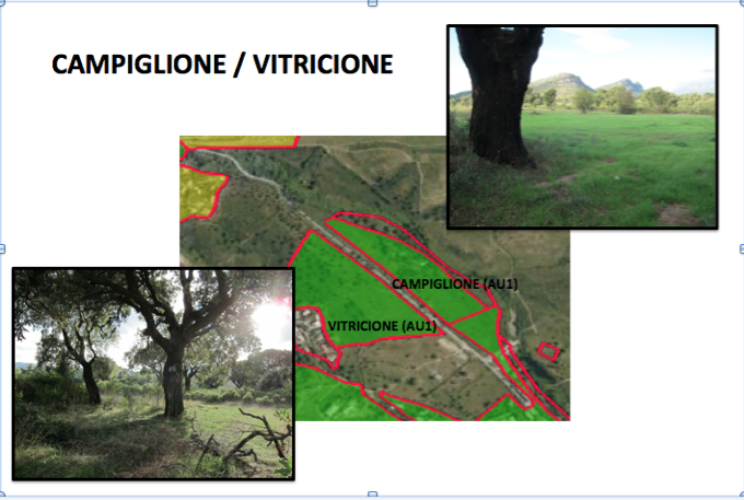 Oletta Campiglione:Vitricione
