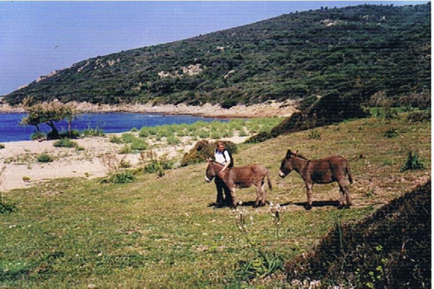 image Cala di Fica 2000 plage aux anes - copie