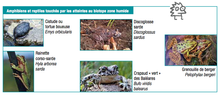 faune Ortolo zone humide