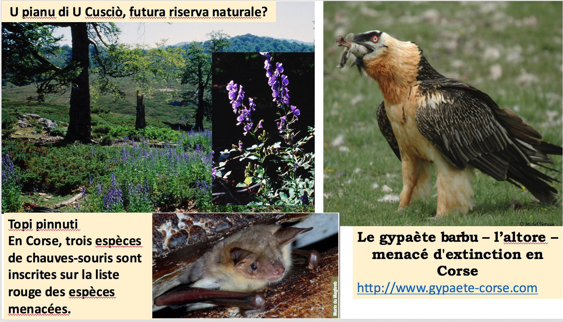 4 a nature 1 cuscionu altore b