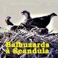 Le 1er juillet 2019, le Comité consultatif de la Réserve Naturelle de Scandula s'est à nouveau réuni après deux années d'interruption. Il rassemblait différents partenaires institutionnels, associatifs, socioprofessionnels…. Au cours […]