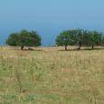 Sant'Antoninu. Sur une parcelle agricole à fortes potentialités, le maire compte réaliser un nouveau parking. U Levante a formulé un recours gracieux auprès du sous-préfet de Calvi, lequel a signé […]
