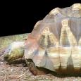 Six mois de prison avec sursis et 20000 euros d'amende pour trafic de tortues pour le directeur du parc zoologique A Cuppulata, situé en Aiacciu (16 janvier 2013). Il a […]